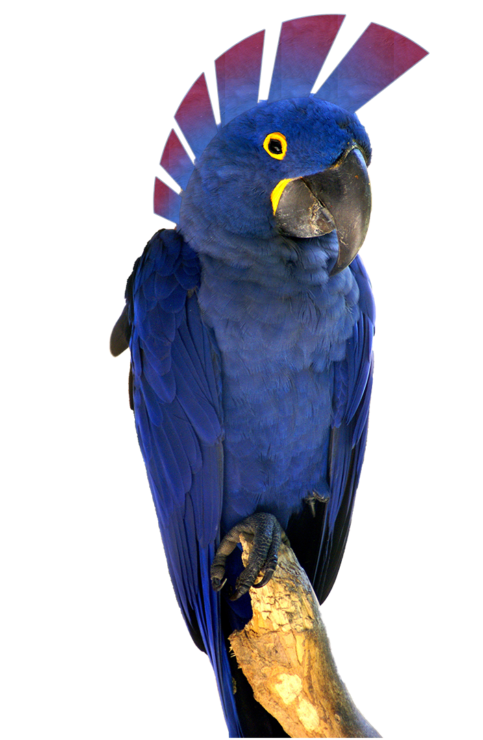 blue-macaw-rio.png